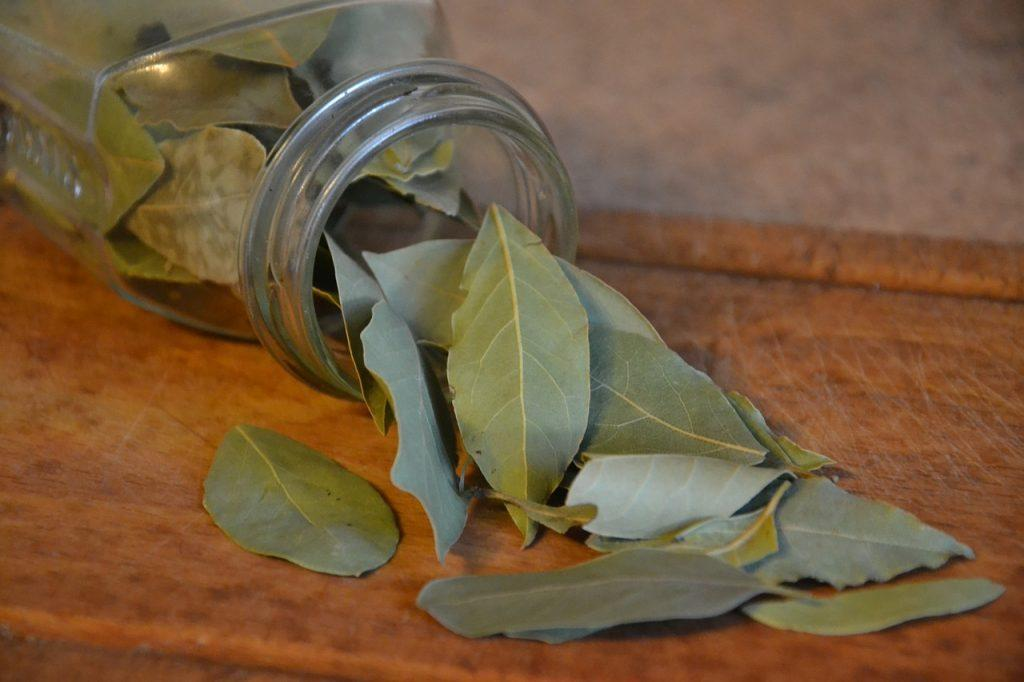 Folhas de Louro - Banho para atrair dinheiro e sorte