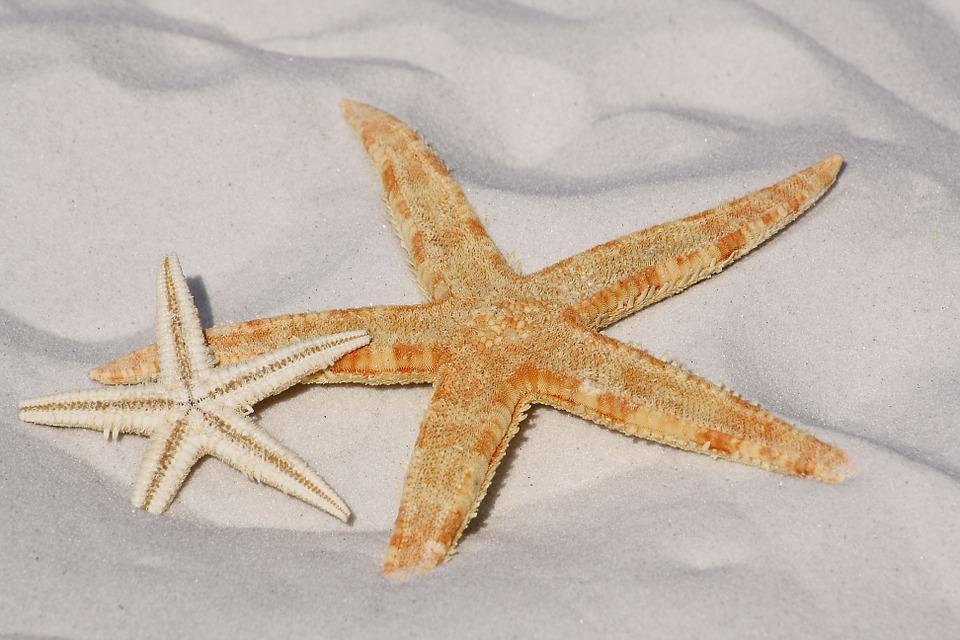 Estrela do Mar - Simpatias para Atrair o Amor